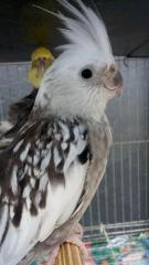 Minhas aves