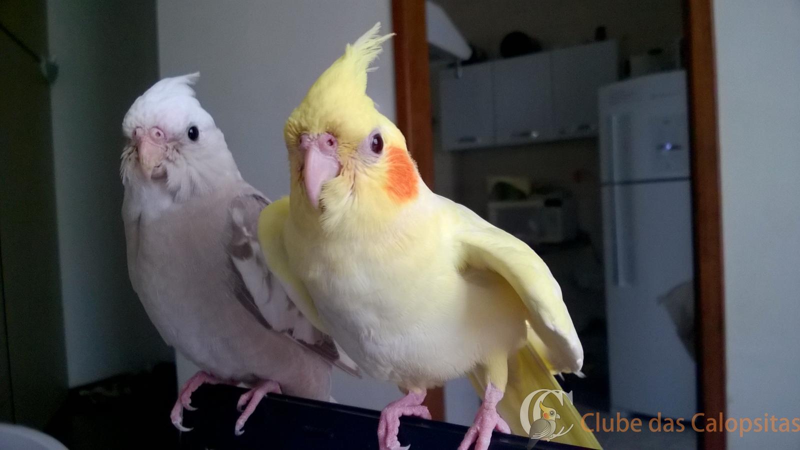Bartira e Lisa