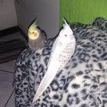 Kaquinho e Lilica