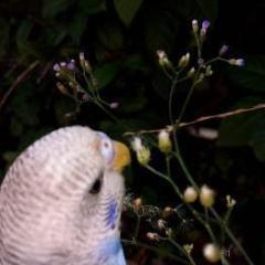 amoureux des oiseaux